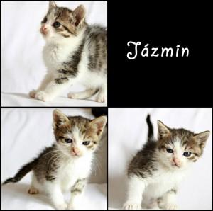 Jázmin cica keresi új gazdiját
