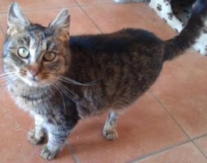Nifi cica gazdira vár