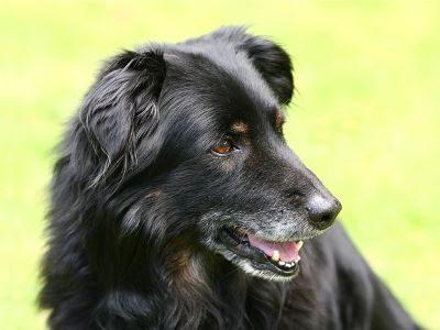 szép kutya